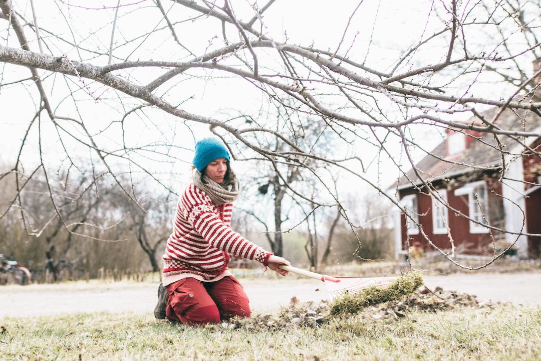 Spring Volunteer in Garden